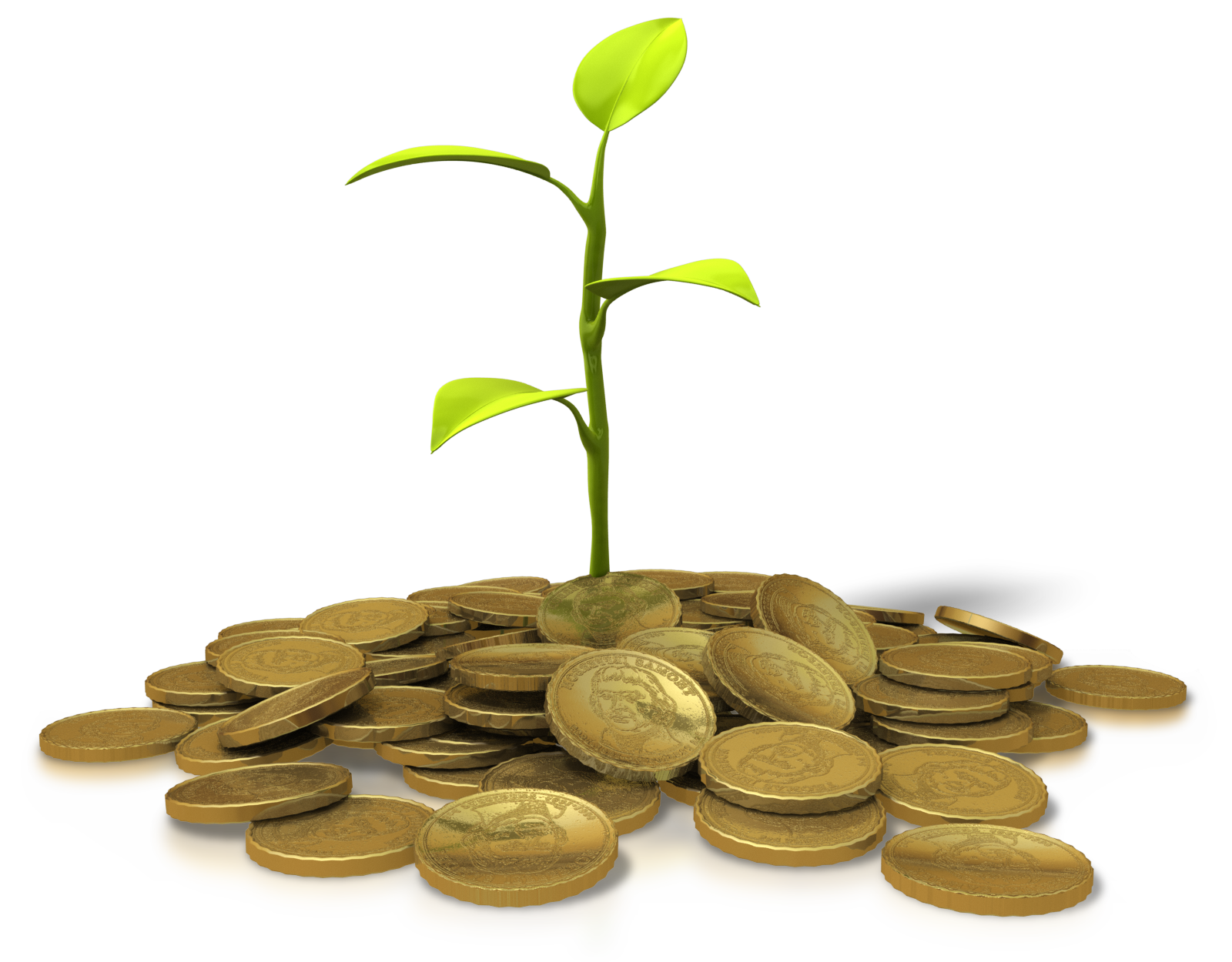 money plant consulting A money tree plant is a special type of bonsai tree the design originated in taiwan in the 1980s, and it was quickly picked up by many other asian nations .